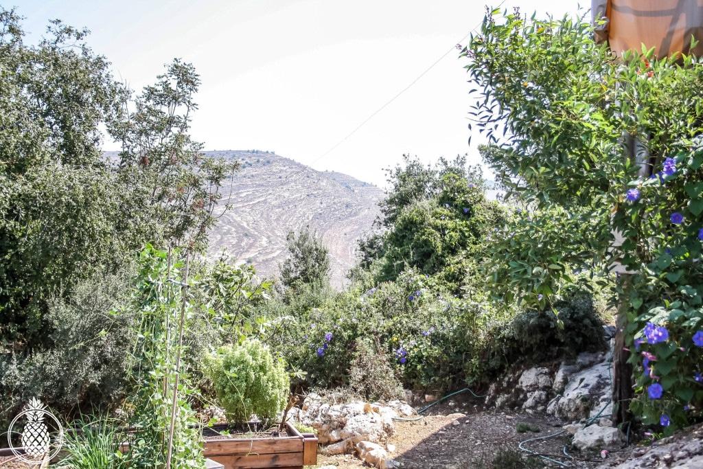 בראנץ׳ טעימות במטבח של רמה בנטף best brunch in israel Rama's kitchen-1