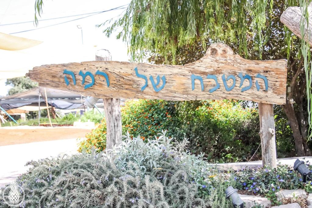 בראנץ׳ טעימות במטבח של רמה בנטף best brunch in israel Rama's kitchen-60