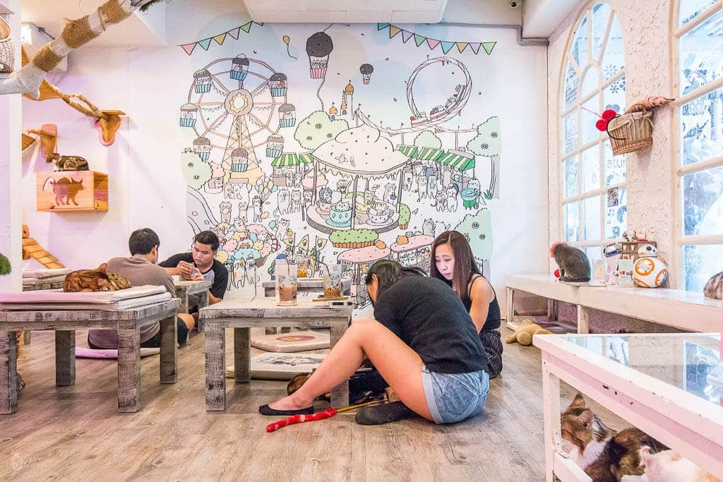 Bangkok - 9 unique and different things to do in the capital of Thailand {Caturday Cat Café}