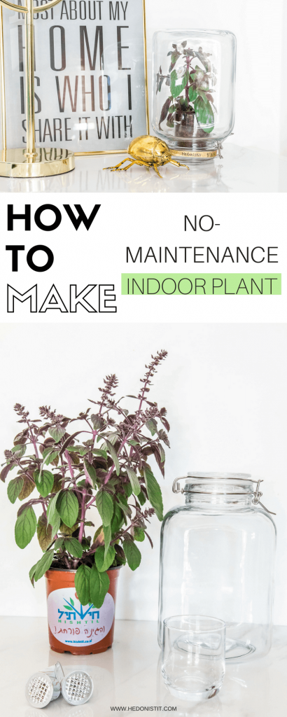 Pikaplant Jar DIY - make your own no-maintenance indoor plant at home! this unique plant has its own watering system - such a cool home decor idea - check out the full tutorial @ hedonistit.com