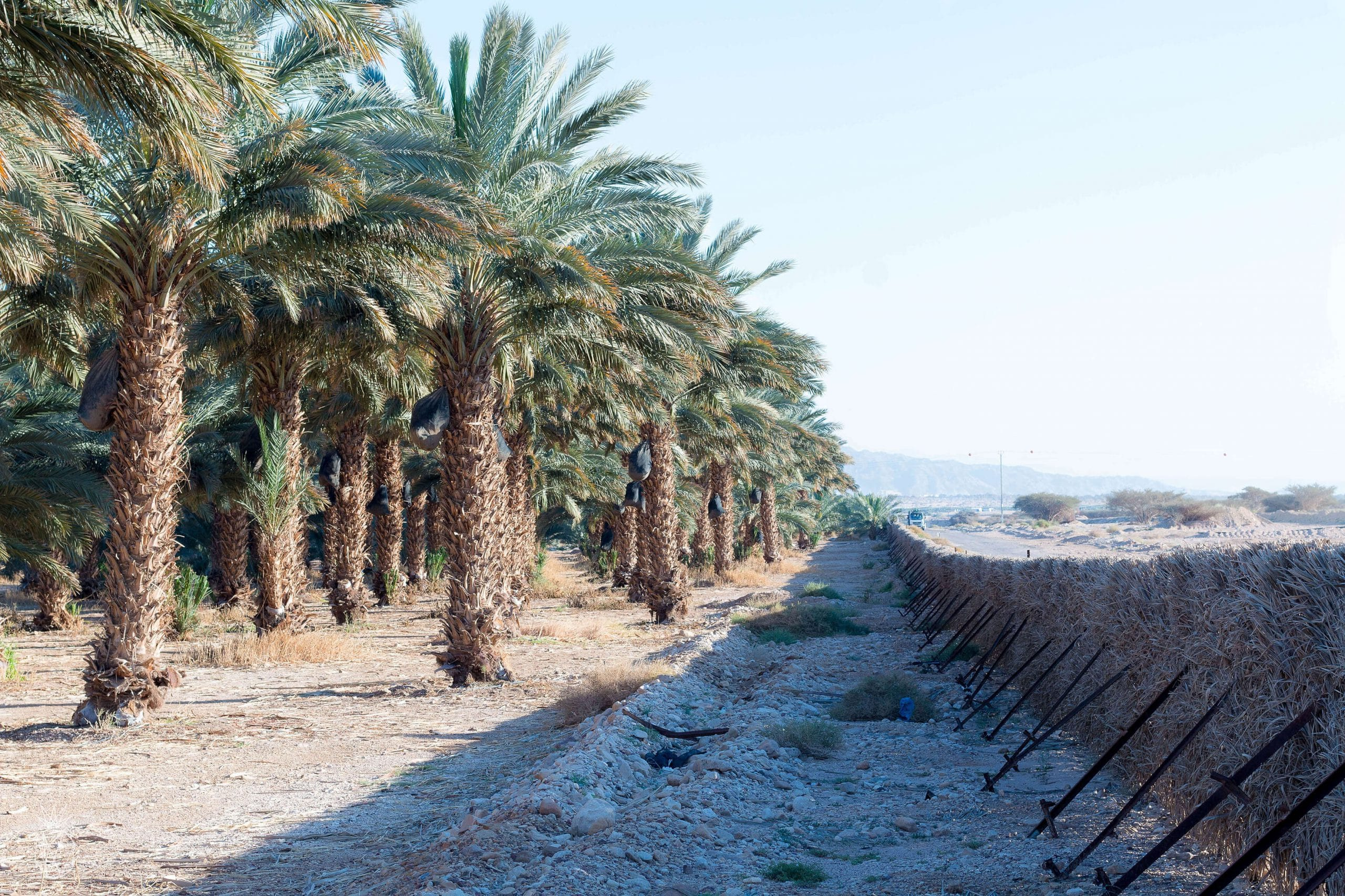What to do in Eilat, Israel - reconnect with desert nature
