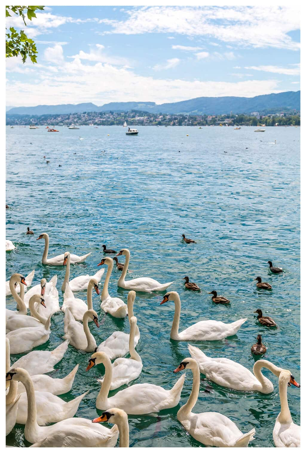 Travel Diaries : A Local Guide To Weekend in Zurich | Travel destinations