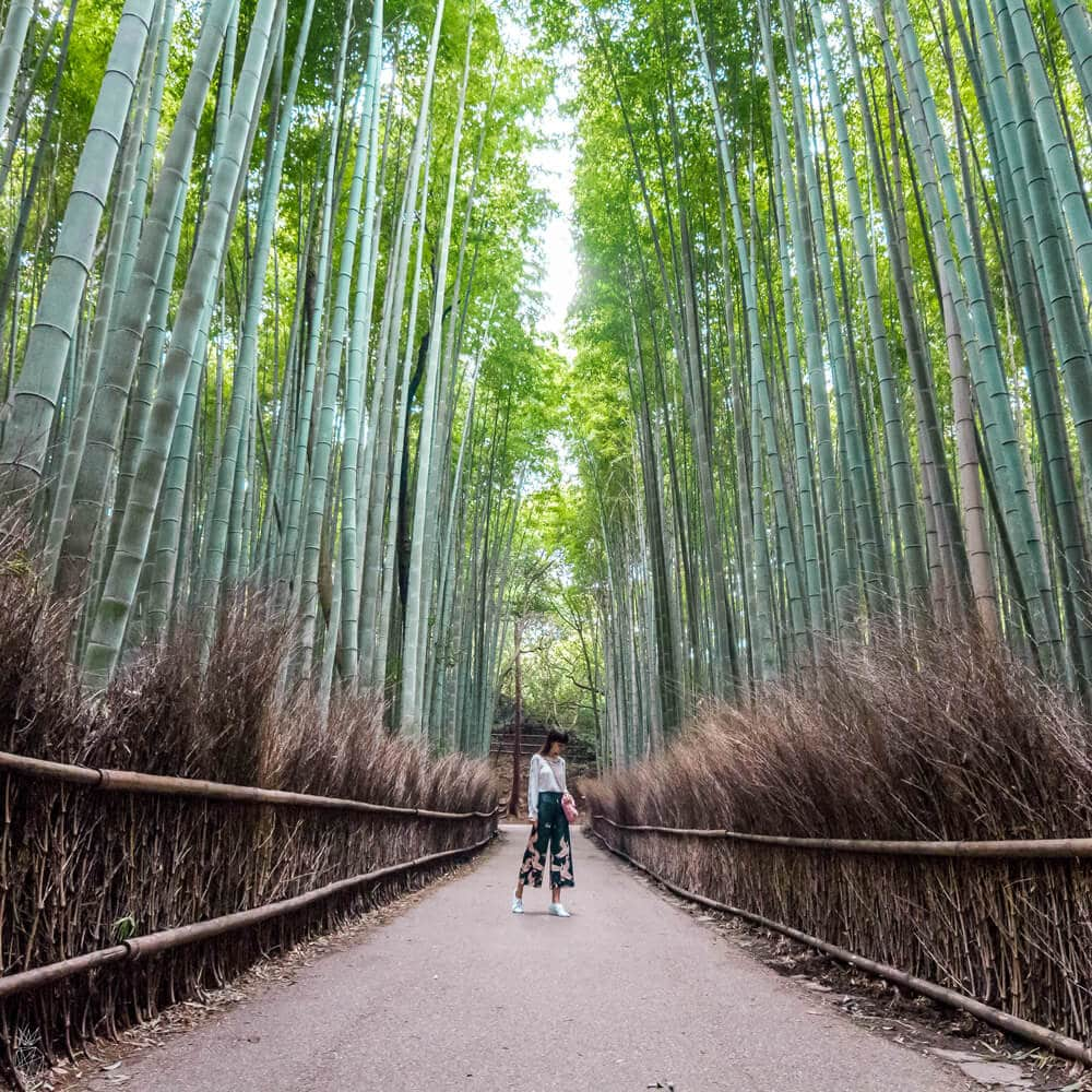 20 Photos to Inspire You to Visit Kyoto Japan | Bamboo Grove Arashiyama