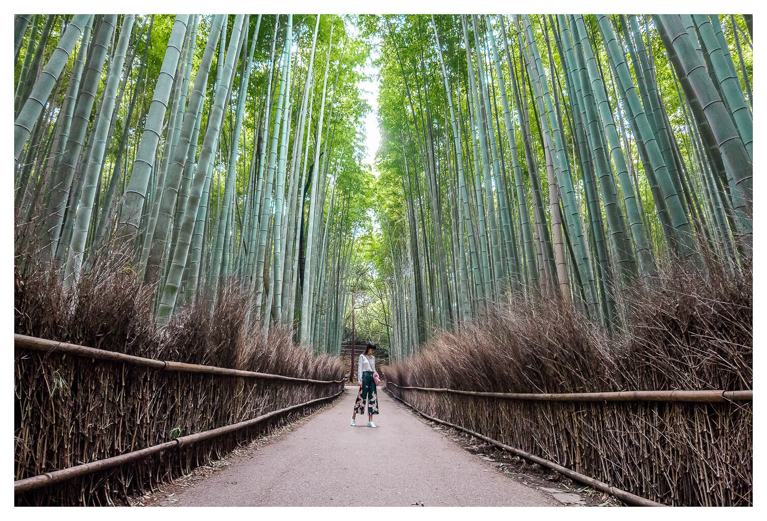 Top Things To Do In Arashiyama, Kyoto | Bamboo Grove