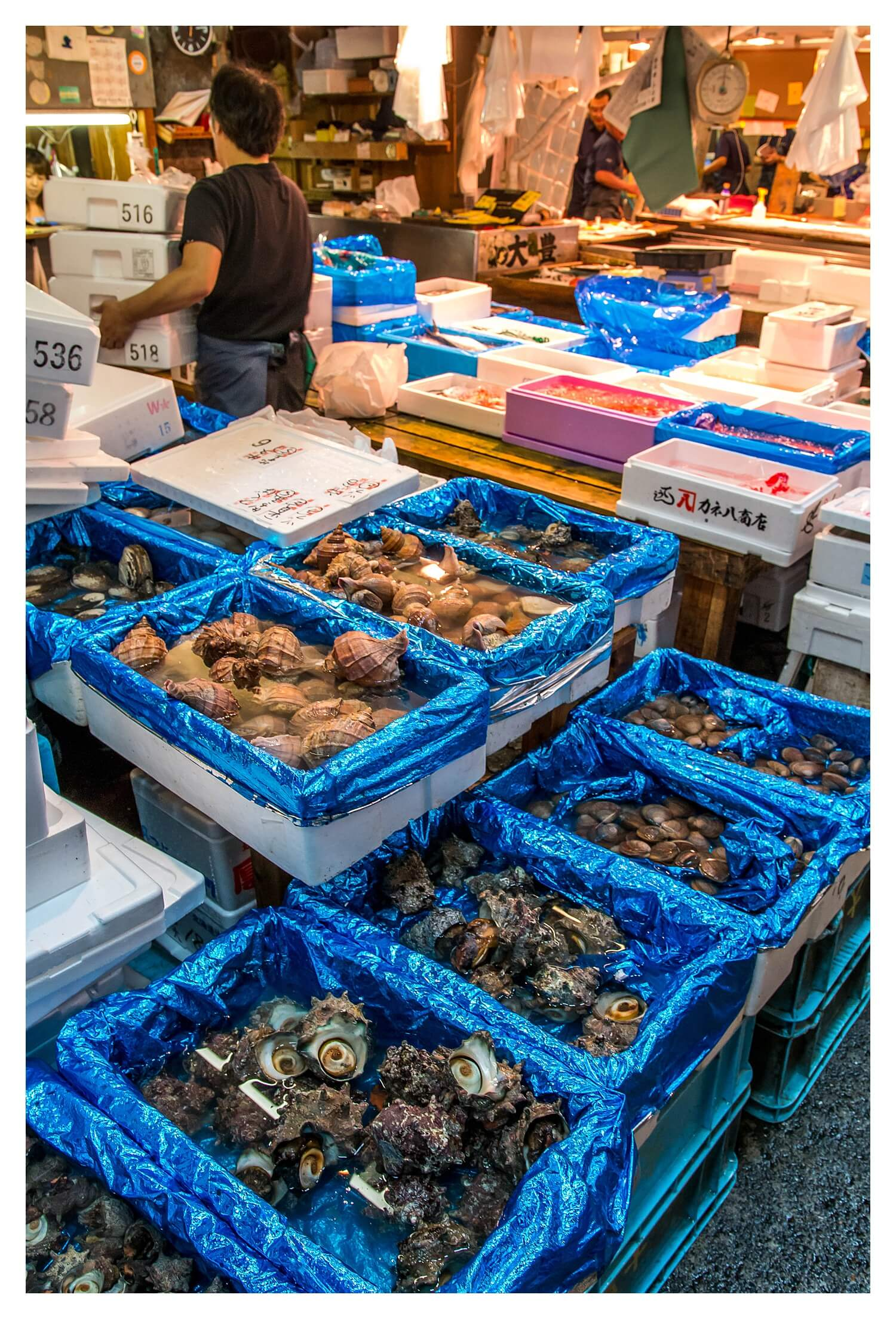 Things To Do In Tokyo, Japan -Things To Do In Tokyo, Japan - Tsukiji Fish Market