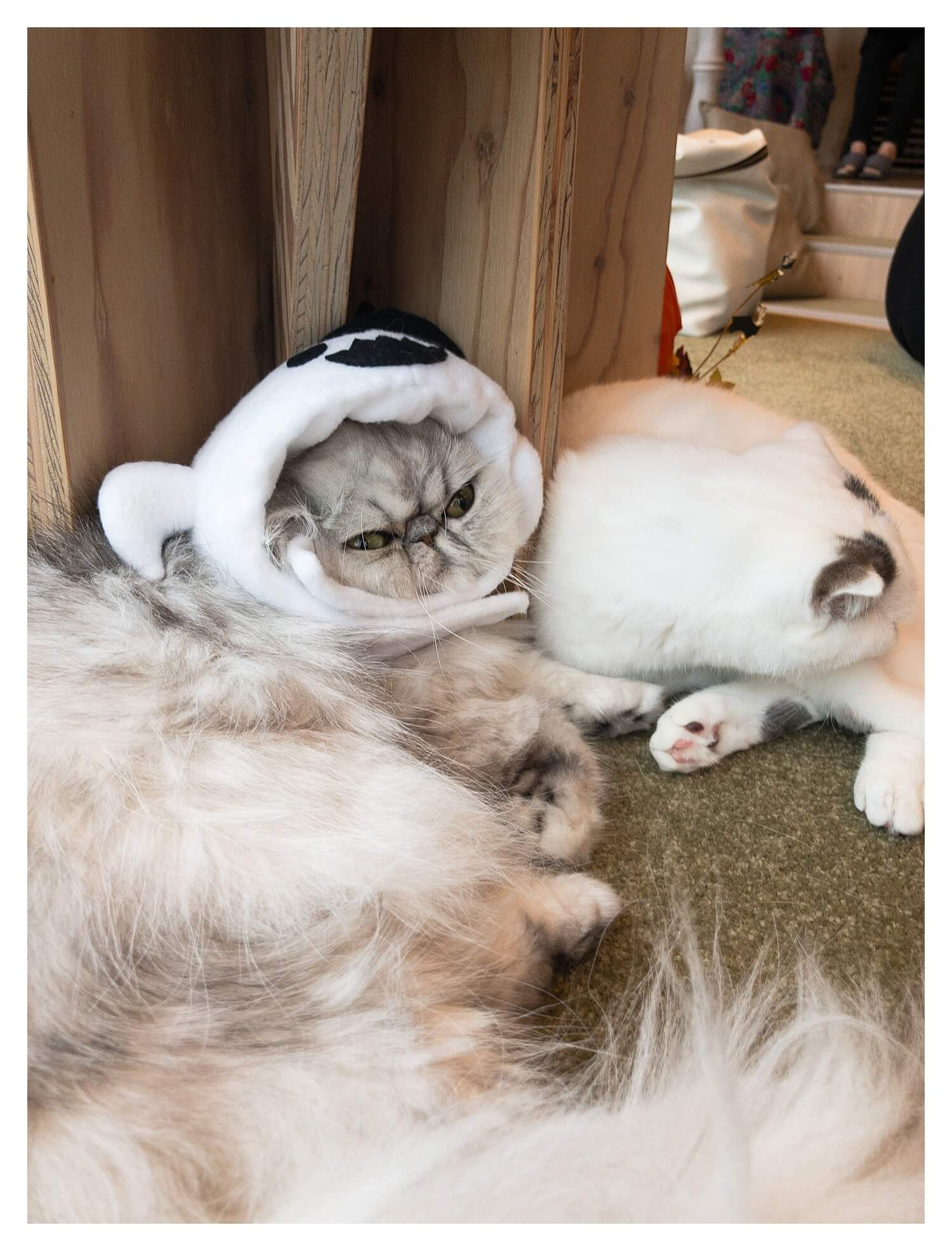 The complete guide to Harajuku - the cute, cool and crazy fashion district of Tokyo - Cat Cafe