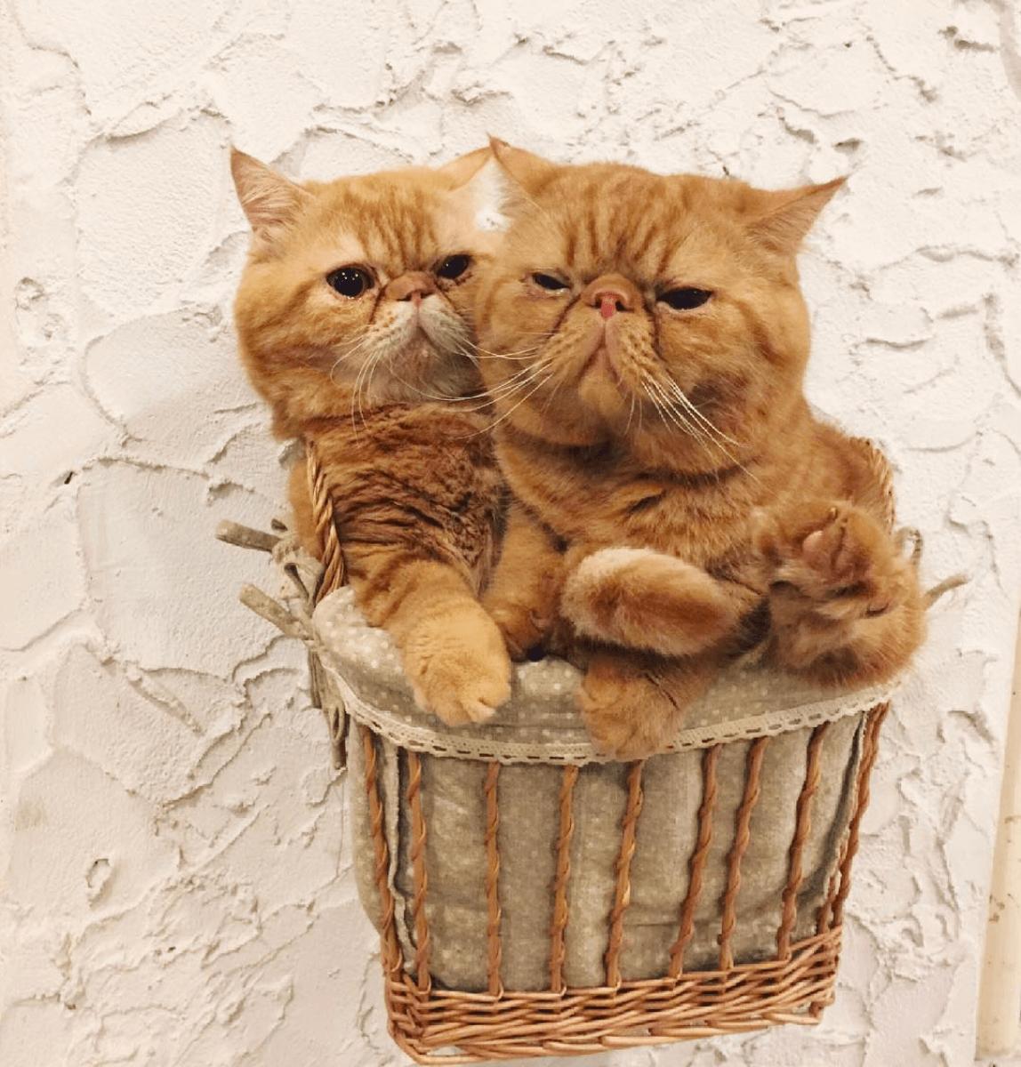בית קפה לחתולים בבנגקוק - מסעדות קונספט מגניבות בעולם