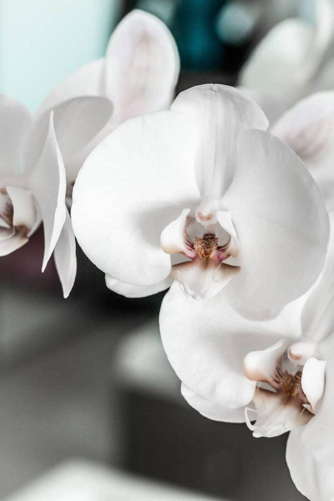 Gucci Bloom Acqua di Fiori   Elizabeth Arden / Skin Illuminating Brightening Night Capsules   Giorgio Armani / Ecstasy Lacquer Liquid Lipstick   Beauty products review